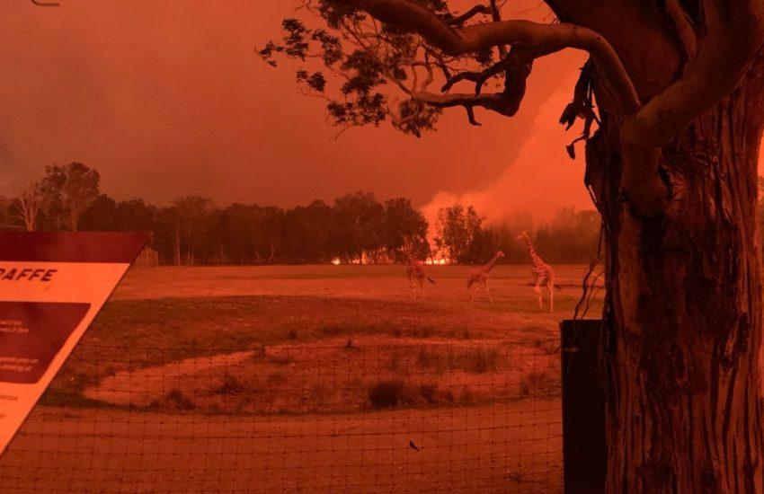 Mogo Zoo in bushfire